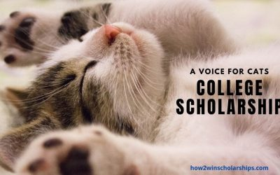Cat Scholarship for College – A Voice for Cats