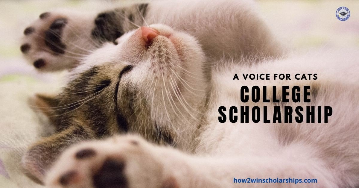 Cat Scholarship for College - A Voice for Cats